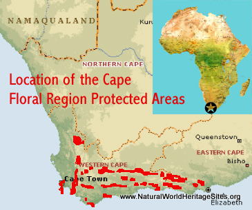 Map showing the location of Cape Floral Region Protected Areas world heritage site in South Africa