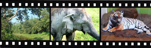Images of Thungyai-Huai Kha Khaeng Wildlife Sanctuaries World Heritage Site in Thailand