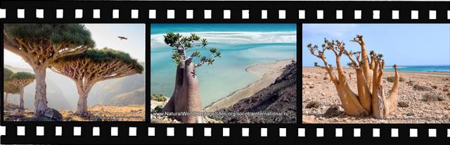 Images for Socotra Archipelago World Heritage Site in Yemen
