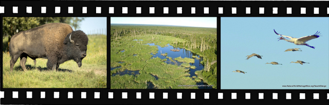 Images of Wood Buffalo National park World Heritage Site in Canada