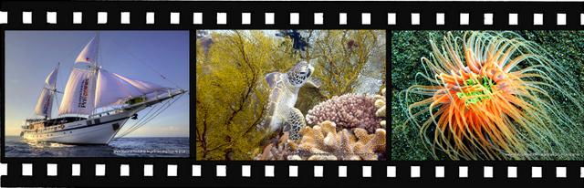 Images for Tubbataha Reefs Natural Park World Heritage Site in Phillipines