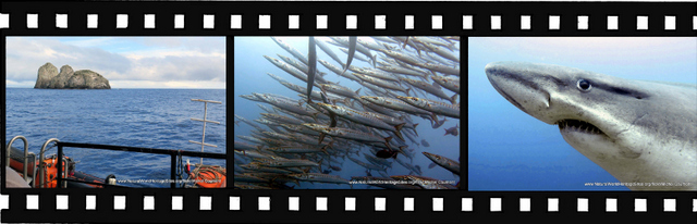 Images for Malpelo Fauna and Flora Sanctuary World Heritage Site in Colombia